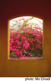Mexican Window full of Bougainvillea