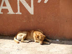 Even dogs take siestas in San Miguel de Allende