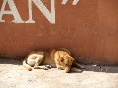 Even dogs take siestas in San Miguel de Allende