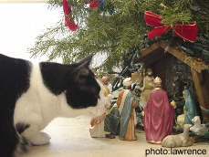 A Cat Gets Into Christmas
