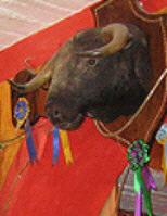 A stuffed bull greets you on entering Restaurant Ole Ole, San Miguel de Allende